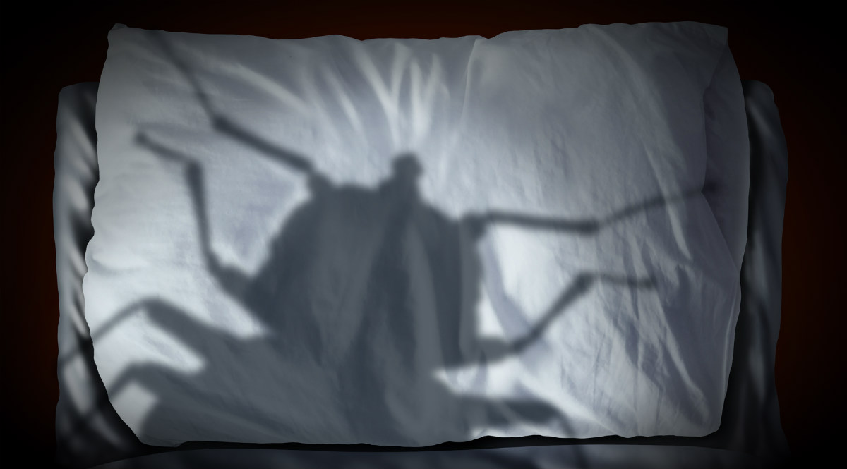 bed bug shadow