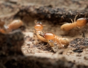 are termites active during winter?